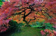 The 16 most beautiful trees in the world